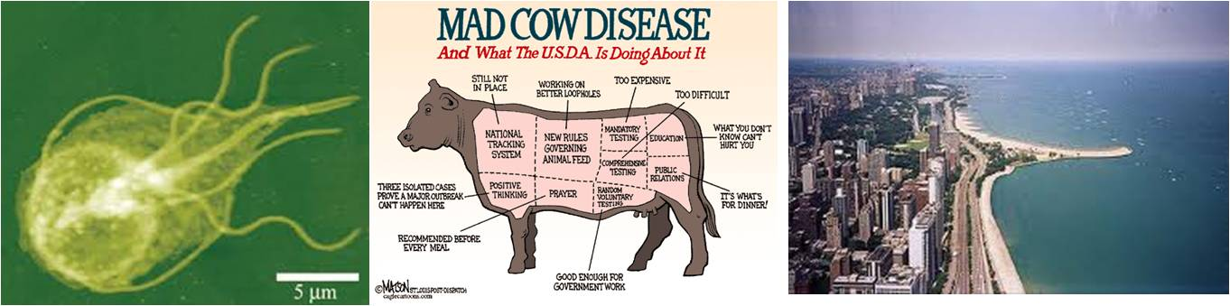 mad cow disease research paper A case for the role of copper deficiency in mad-cow disease and human creutzfeldt-jakob disease  research has suggested that copper also has an important role to.
