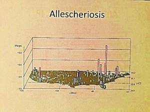 Allescheriosis