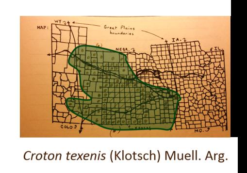 Croton-texenis-(Klotsch)-Muell-Arg_TexasCroton_v2