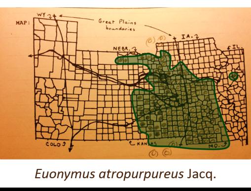 Euonymus-atropurpureus-Jacq_wahoo_v2