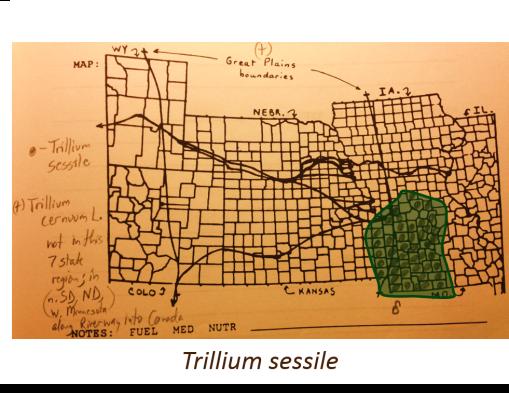 Trillium-sessile_T-cernuum-L_v2