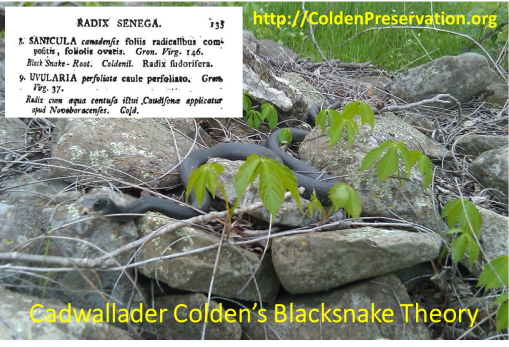 ColdenDay_BlacksnakeTheory