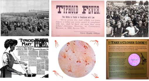 Typhoid_collage